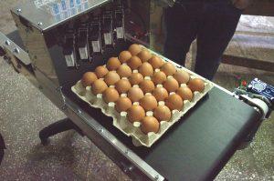 Принтер для маркування яєць на стрічковому конвеєрі